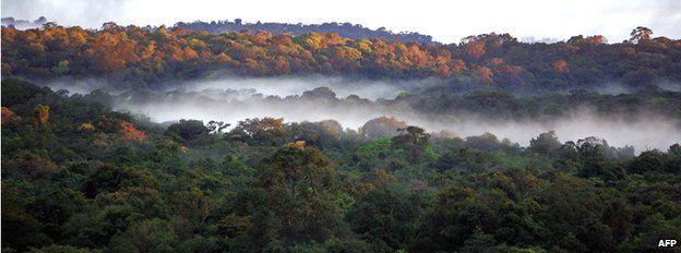 Rainforest in Guyana