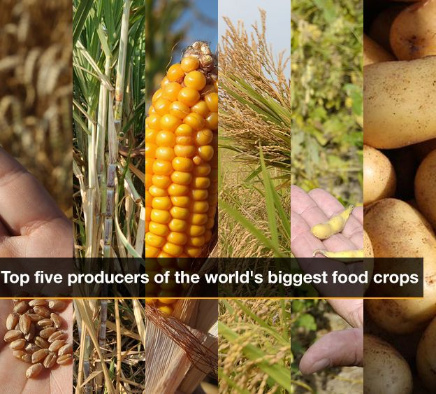 Infographic cover page showing composite image of crops