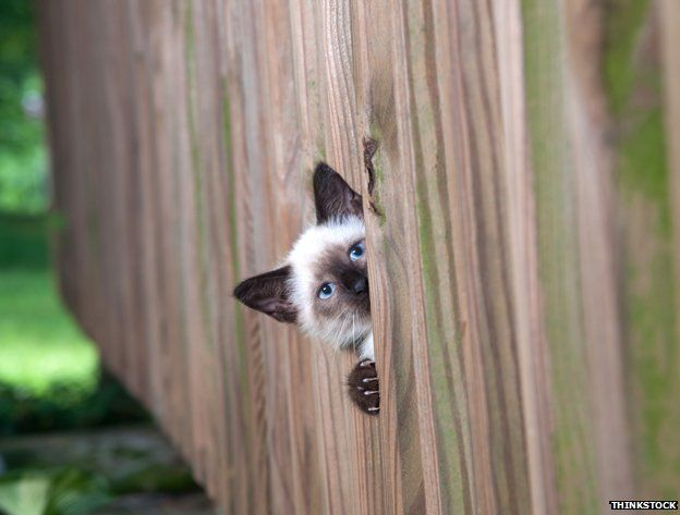 Cat spying through fence