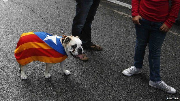 Dog wears Catalan flag in Barcelona