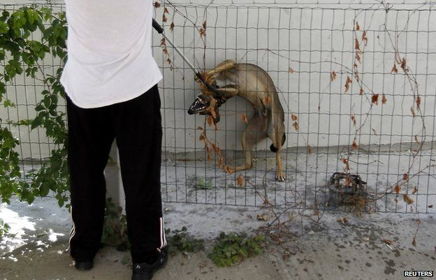 A dog-catcher restrains a dog with a pole in Bucharest, 12 September
