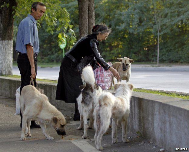 People feed stray dogs in Bucharest, 19 July