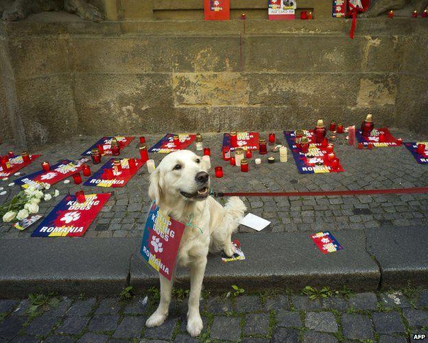 Dog at protest in Prague, 27 Sep 13