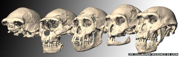 Five Dmanisi skulls