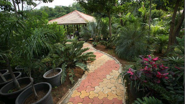 A section of Ajoke Muhammed's garden in Abuja