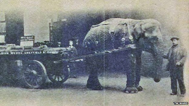 Lizzie the elephant with handler