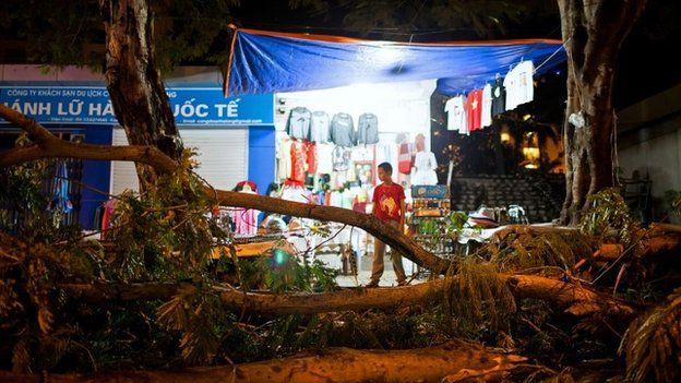 Fallen tree in Halong City, Vietnam, 11 November 2013