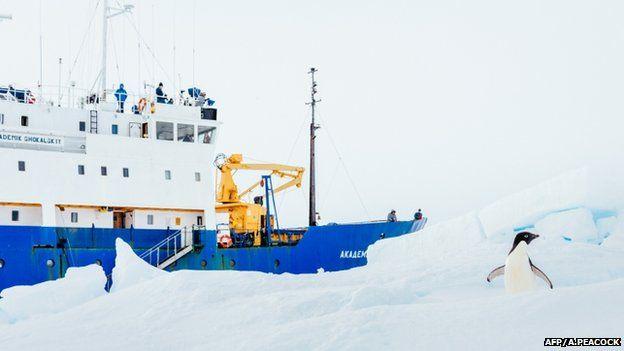 An inquisitive penguin next to the stranded ship Akademik Shokalskiy, 28 December 2013