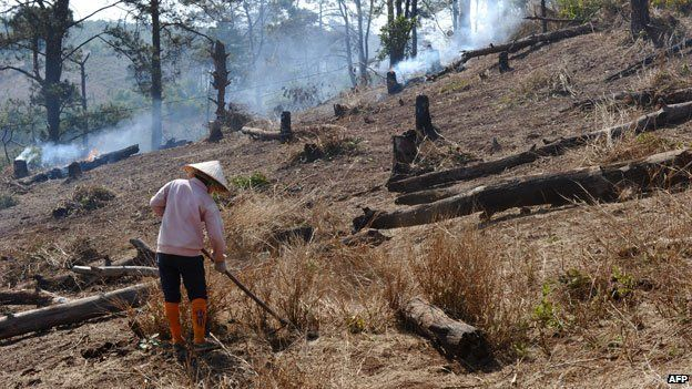 Forest felled for crops to be planted