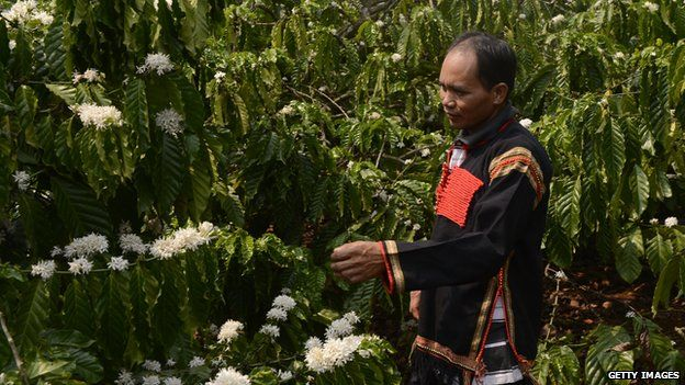 A coffee farmer walking at his coffee farm in the suburbs of Buon Ma Thuot city in the central highland's province of Dak Lak, Vietnam, March 2013