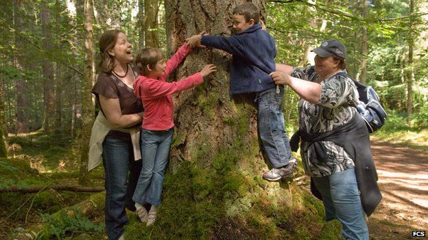 People at the trunk of fir in Reelig Glen