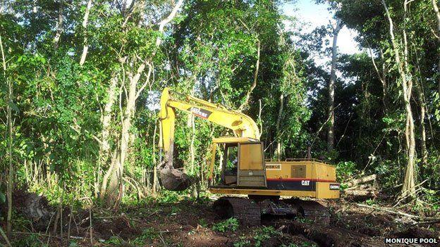 Bulldozer amongst trees
