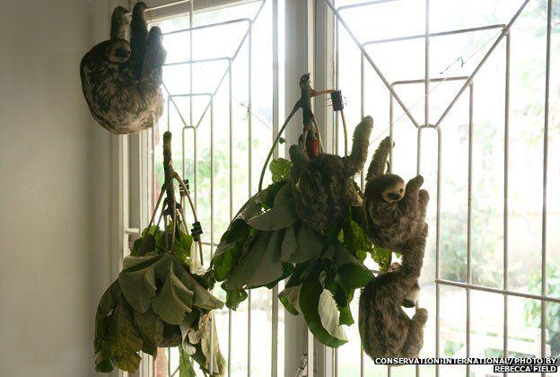 Sloths hang from bars