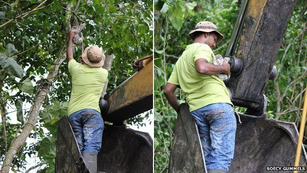 rescuer stands on bulldozer arm to get to a sloth