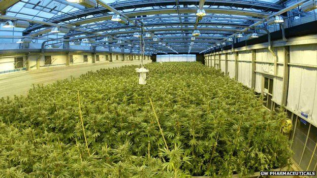 GW Pharmaceuticals, a UK-based medical research firm, is one of the few cannabis-related firms listed on a major stock exchange
