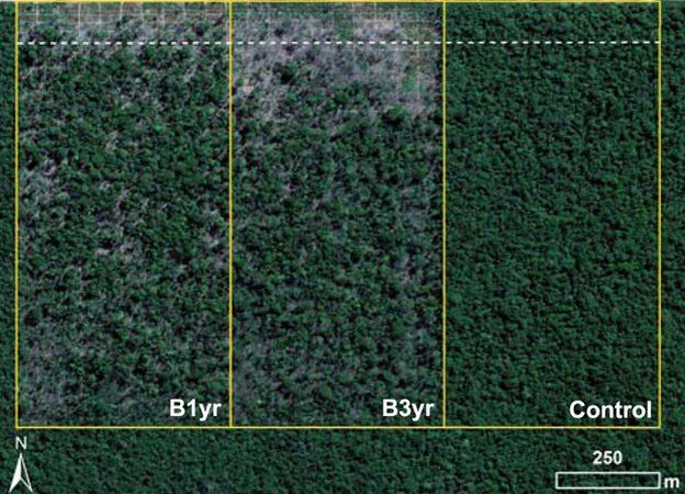 Aerial view of the field experiment's plots; 2011 (Image: P.Brando/PNAS)