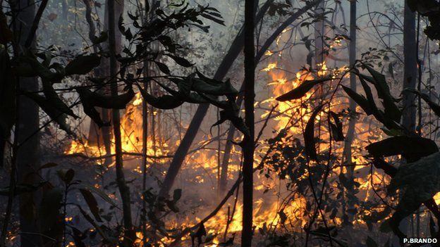 Fire in one of the experiment's plots (Image: Paulo Brando)