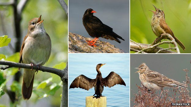 A composite image of several birds imported to the US