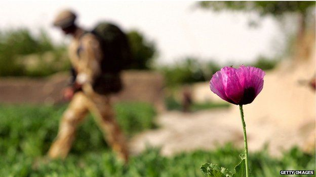 British soldier passes an early blooming poppy, the raw material for heroin, in Helmand