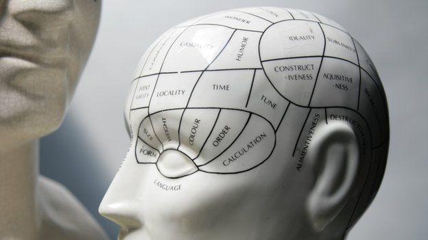 A phrenology model head