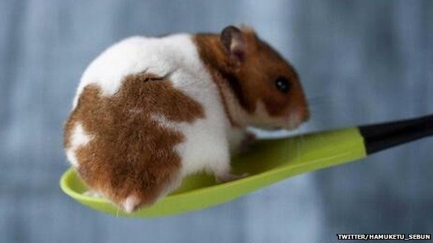 Hamster on a spoon