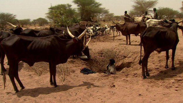A Tuareg man getting water from a well for cattle, Niger