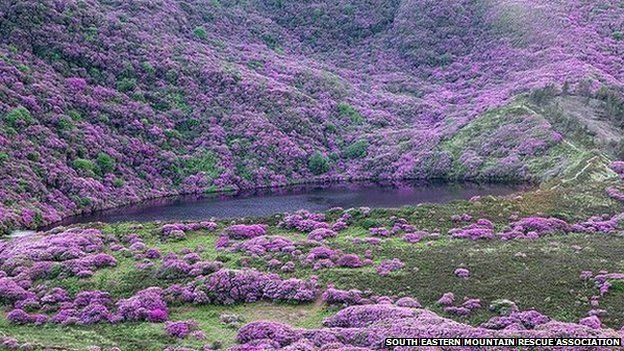 In 2014, two walkers were rescued by boat from rhododendrons in the Knockmealdowns Mountains