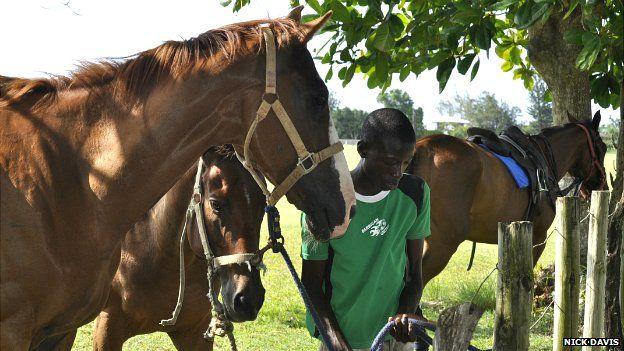 Kenrick Brown, 15, works at a stables in Kingston looking after ponies - June 2014