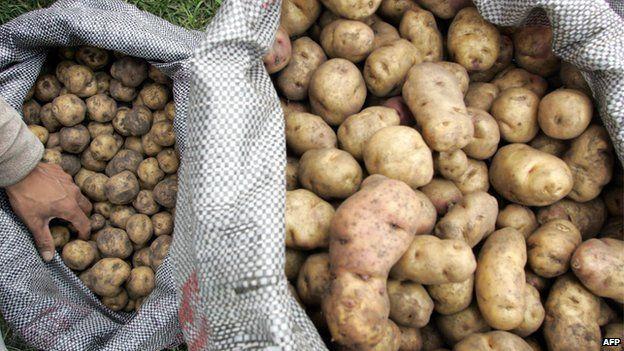 Potatoes in sacks