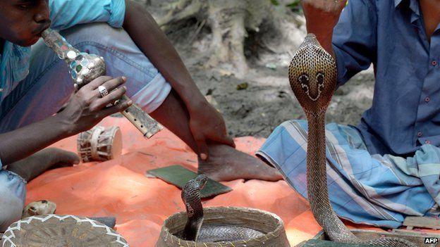 Snake charmers in Calcutta in 2013
