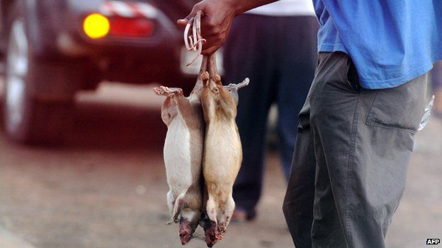 A Ghanaian vendor offers his catch known as ''bushmeat'' on route between Kumasi and Accra on 8 February 2008