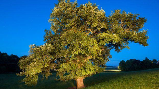 Gowk tree