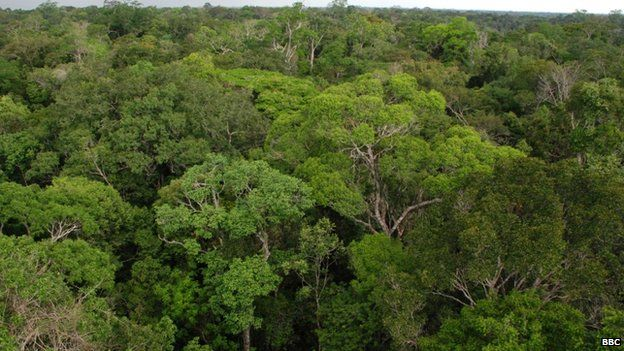 View from the Needle of Heaven INPA research tower in the Amazon jungle, north of Manaus Sept 2008