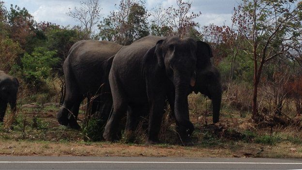 Elephants at the side of the road