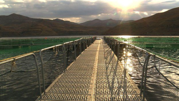 A growing cage, where thousands of Rainbow trout are reared on the Katse Dam in Lesotho
