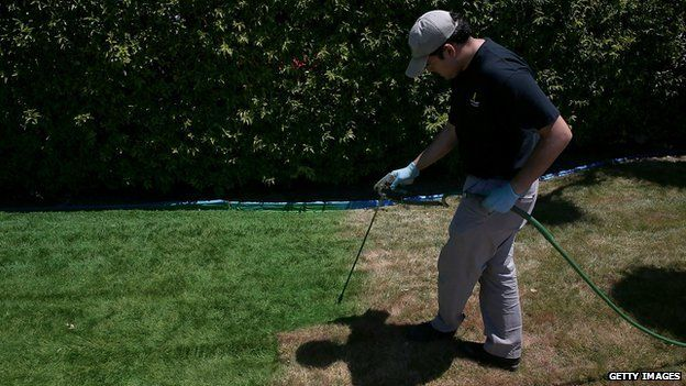Man sprays lawn green