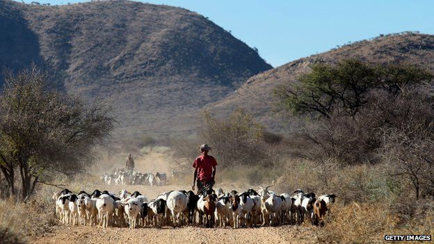 A man with a herd of goats on a farm near Gobabis, east of the capital Windhoek