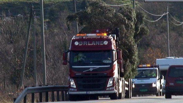 Tree on lorry