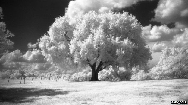 Using infra-red film, Gary Cole photograph of a tree