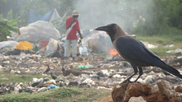 Crow at a rubbish dump in Mombasa
