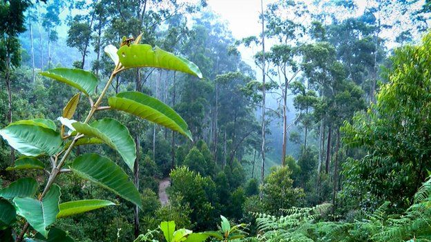 Cibitoke in Burundi