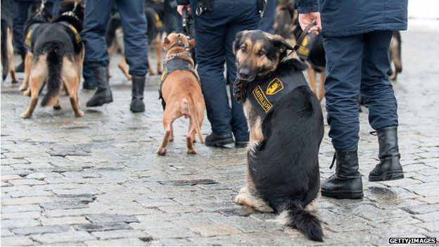 Policemen with guard dogs