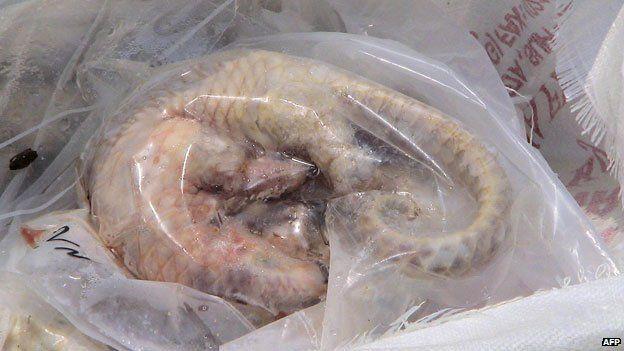 dead pangolin in a bag