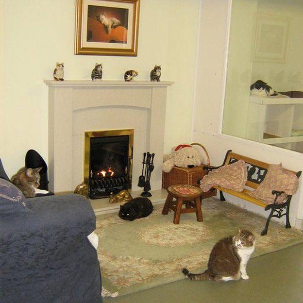 Cats enjoying their retirement