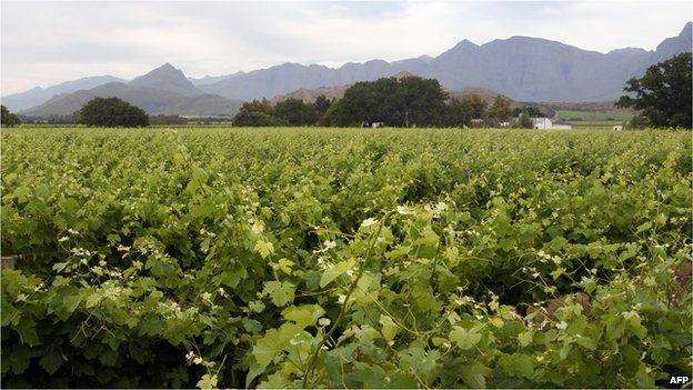 File image, farm in the Western Cape province, 2012