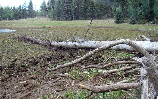 Damage at water source