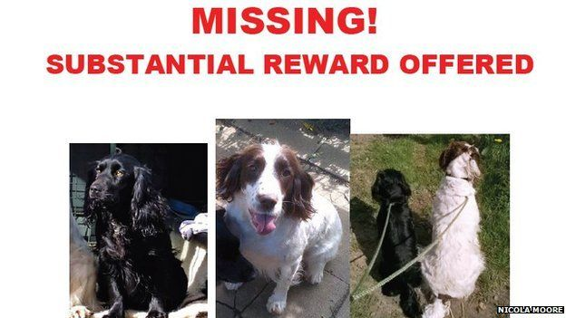 Part of missing dogs poster