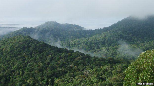 Amazon tropical forest (Image: Roel Brienen)