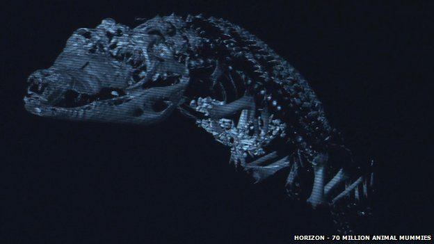 Crocodile scan