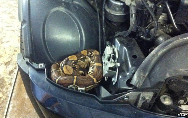 A snake in a car
